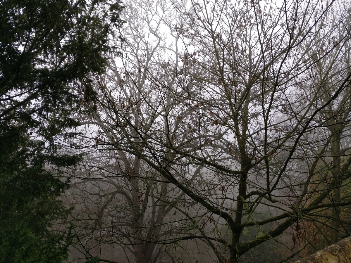 Misty winter trees
